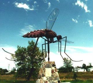 Komarno_mosquito7