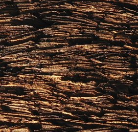 Cypress_hinoki_bark_roof_by_Fg2_dtl.