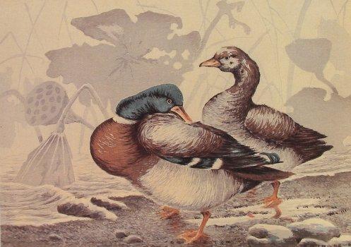 Kiyochika_Ducks_Withered_Lotus_1879_No.6