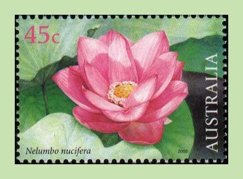 Lotus_stamp
