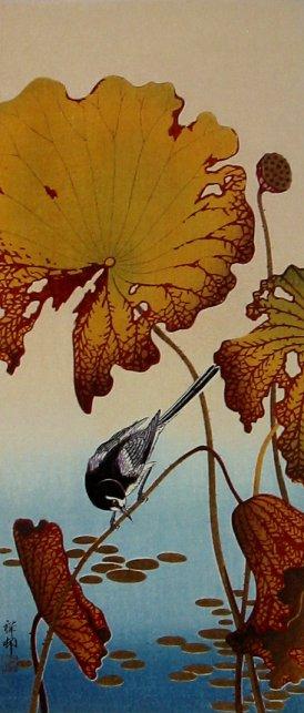 Shoson_lotus6