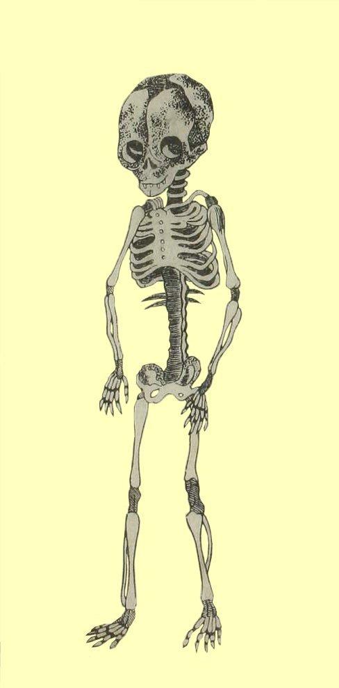 Kaitai_shinsho_skeleton