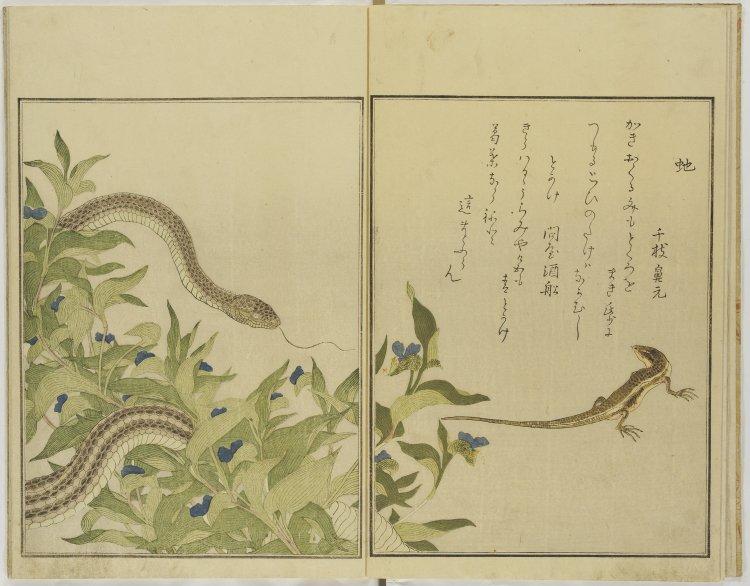 BM_skink_rat_snake_ehon_mushi_erami_Utamaro_7