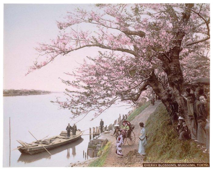 MFA_Cherry_blossoms_postcard_ca._1895_Mukojima_7b