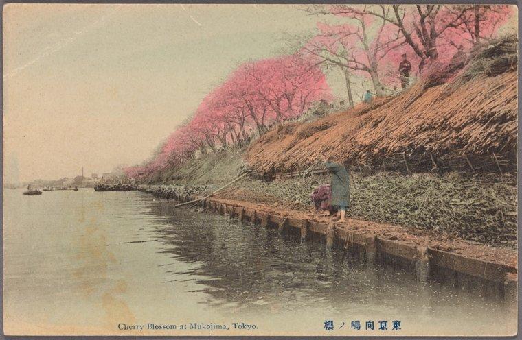 NYPL_Cherry_blossoms_Mukojima_7