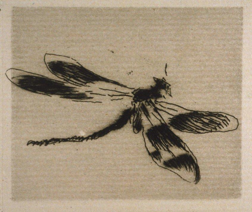 Achenbach_ca.1875_Manet_dragonfly_7b