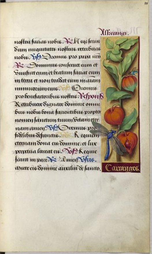 BNF_Bourdichon_Anne_Hours_dragonfly_7b
