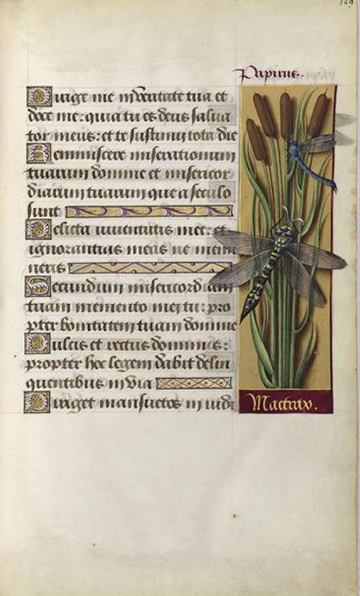 BNF_Bourdichon_Anne_Hours_tombo_7c
