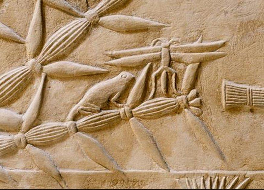 Kagemni_tomb_dragonfly_7