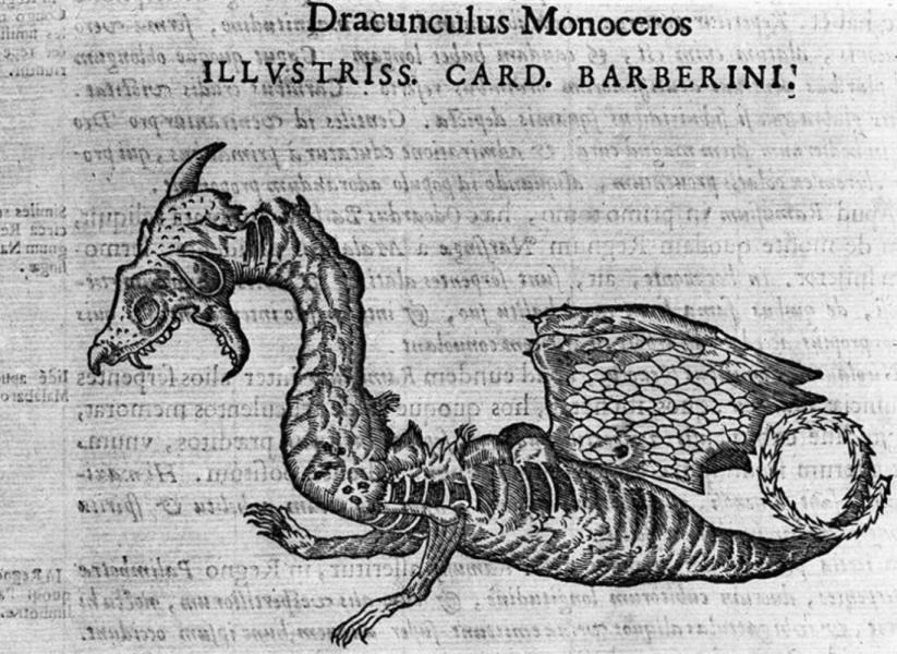 MNHN_1561_Drancunculus_Monoceros_7b